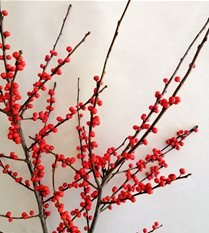 ilex berry branch