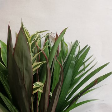 tropical mix foliage