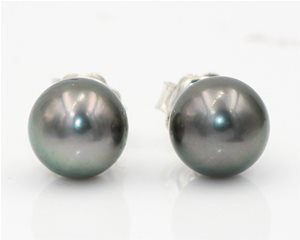 Black south sea pearl studs